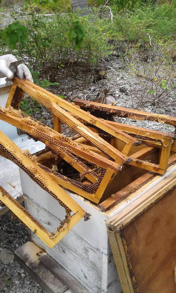 Naea Tokoragi s'est lancé dans l'apiculture à Fakarava en 2014. Et c'est la première fois qu'il est victime de vol de miel depuis qu'il a lancé son activité.