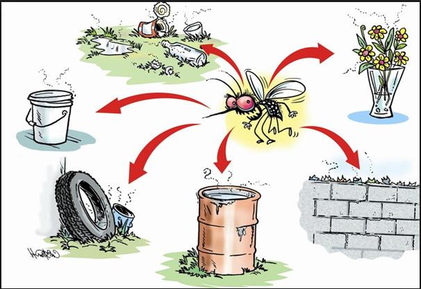 our lutter contre les épidémies suite à l'introduction de nouveaux virus, l'élimination des gîtes larvaires doit être continue en supprimant ou protégeant toute zone de stagnation d'eau douce une fois par semaine.