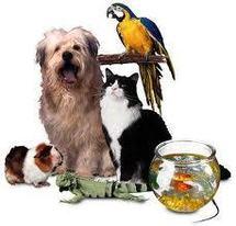 Avoir un animal de compagnie n'est pas si bon qu'on le pense pour la santé