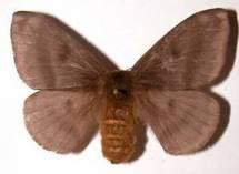 Une commune de Guyane sous couvre-feu pour cause de papillons urticants