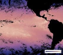 La température de surface dans l'océan Pacifique Est du 26 février au 5 mars. Les zones en jaune dépassent les 30 degrés ! (Nasa Earth Observations)