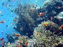 Australie: appel à protéger la biodiversité unique de la mer de Corail