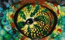 La Terre a 8,7 millions d'espèces vivantes, selon une nouvelle estimation