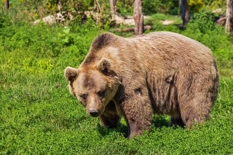 40 ours décomptés dans les Pyrénées en 2018