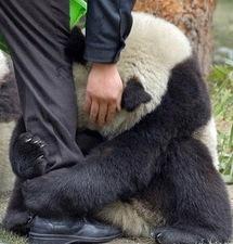 USA: les animaux du zoo de Washington ont senti l'arrivée du séisme