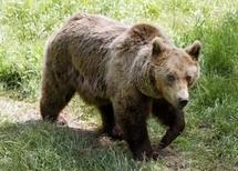 """Les """"anti-ours"""", en colère, menacent les plantigrades d'un sort funeste"""