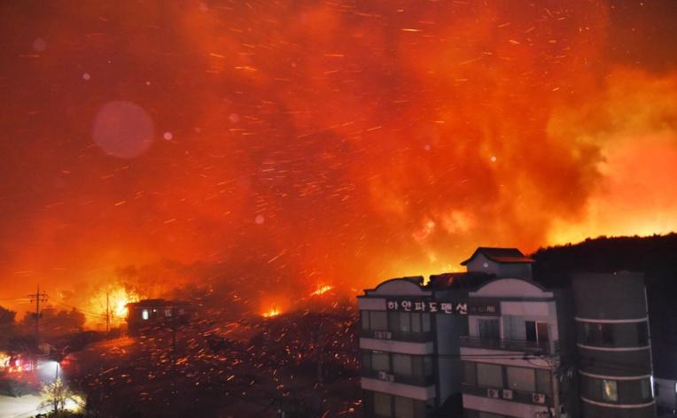 La Corée du Sud en proie à de gigantesques feux de forêts