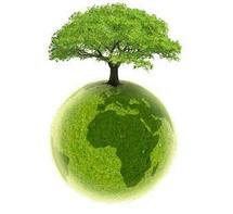 Replanter 150 millions d'ha de forêt pourrait rapporter 85 mds USD par an (IUCN)