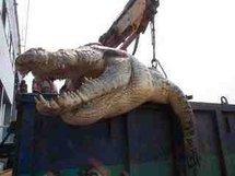 Des défenseurs des animaux demandent de rendre sa liberté au crocodile tueur