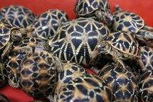 Thaïlande: la douane saisit des milliers d'animaux en voie de disparition