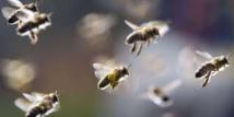 Les abeilles de Notre-Dame sont sauvées