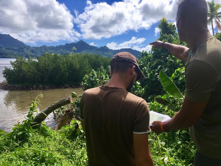 La mangrove polynésienne sous les radars de la Fape