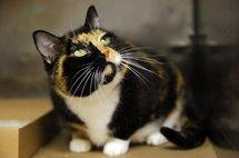 Un chat perdu dans le Colorado retrouve sa famille cinq ans après à New York