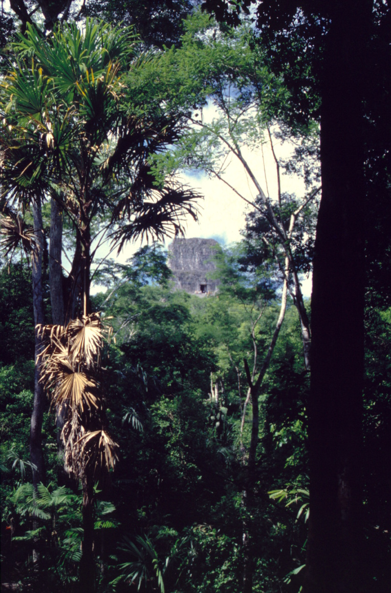 """Un """"temple"""" de Tikal attendant une restauration ; c'est de cette manière que se présentaient les ruines de la cité au moment de leur découverte. Des dizaines et des dizaines d'ouvrages sont encore dans cet état, dans l'attente de mécènes."""