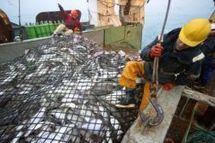 Bruxelles veut partiellement interdire la pêche au cabillaud