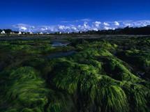 Du papier fabriqué à partir des algues vertes bretonnes