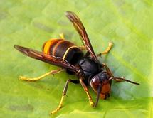 Le Parlement européen met en garde contre la mortalité des abeilles