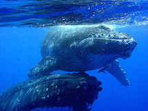 Le tintamarre en mer, enfer des mammifères