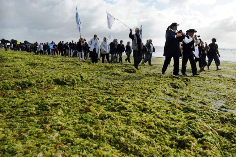 Algues vertes: une bande dessinée jette un pavé dans la mare