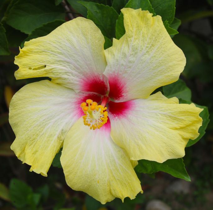 Superbe fleur presque fluo, malheureusement éphémère…