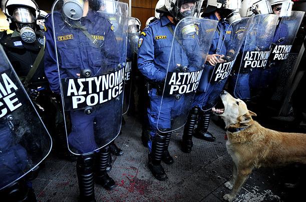 Loukanikos, chien errant dans les manifs d'Athènes, promu star mondiale