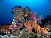 Réchauffement climatique: l'électricité au secours des coraux