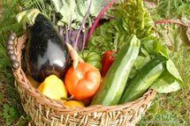 """Le """"bio"""" permet bien d'éviter les pesticides dans son assiette"""
