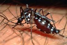 L'OMS redoute une épidémie de dengue type 2 dans le Pacifique