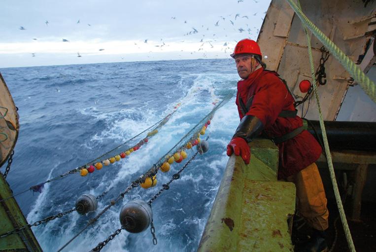 L'UE interdit la pêche au cabillaud en mer Baltique jusqu'au 31 décembre