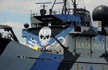Baleine: les opposants utilisent des drones pour traquer les harponneurs