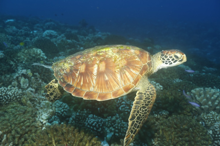 Pollution marine : l'indigestion