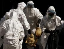 Chine: premier décès de la grippe aviaire en un an et demi