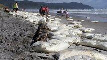 NZ: Des vagues de déchets issus du porte-conteneurs Rena déferlent sur les plages de Tauranga