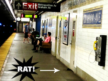 Les rats du métro de New York font l'objet d'un concours photo