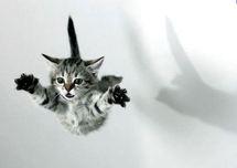 Lancer de chat dans une dispute conjugale : une passante blessée