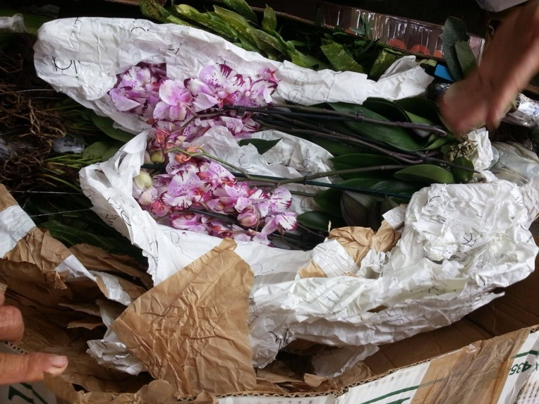Plantes prohibées : sursis requis contre Jean-Claude Tang en appel