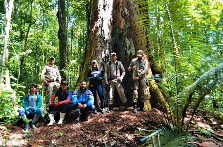 """Le """"plus grand"""" arbre d'Amazonie pas menacé par les feux"""