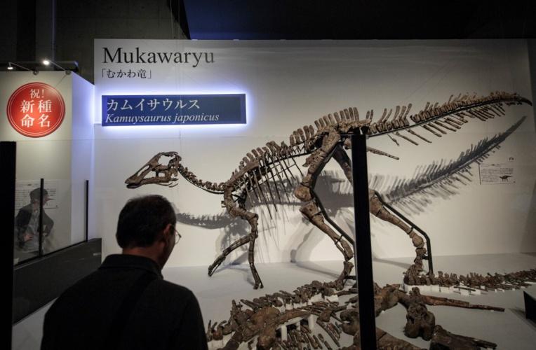 Découverte au Japon d'une nouvelle espèce de dinosaure