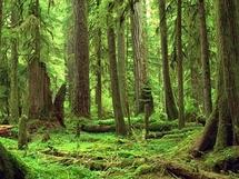 Des normes pour améliorer la gestion durable des forêts