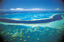 Une banque du sperme pour la Grande barrière de corail menacée