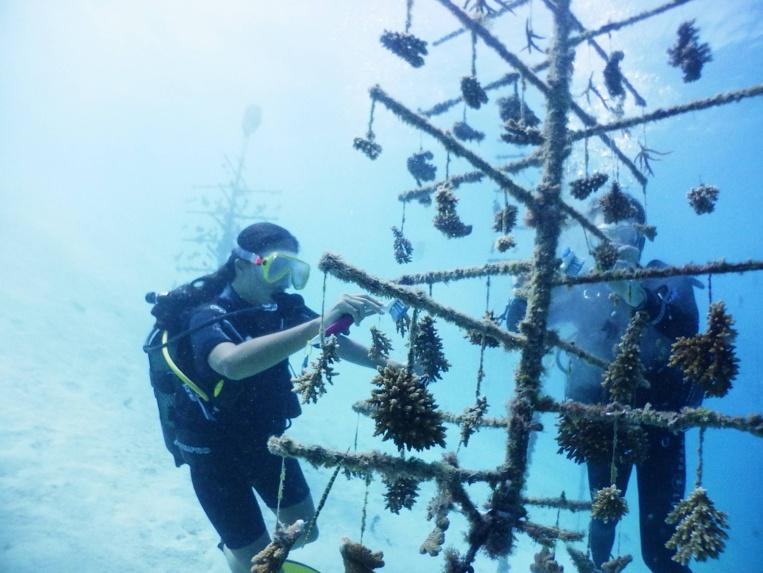 En partenariat avec le CRIOBE, Institut Polynésien de Biomimétisme développe des nurseries de corail plus respectueuses de l'environnement. Le biomimétisme permet de trouver de nouveaux design, de nouveaux matériaux et même de nouvelles fonctions contre le réchauffement climatique .
