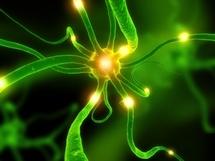 Une protéine liée à Alzheimer augmente chez les sujets sains à tout âge