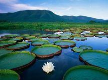 Brésil: les écologistes appellent à protéger le Pantanal, sanctuaire menacé