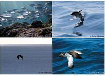 """Vers une bouée """"intelligente"""" à l'écoute des poissons et des oiseaux en mer"""