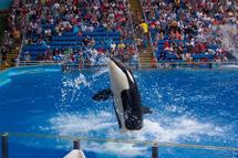 USA: des orques peuvent-elles porter plainte pour esclavage?