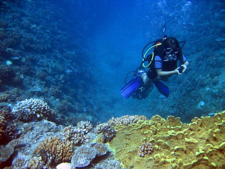 Des coraux décimés par une vague de chaleur renaissent en Méditerranée