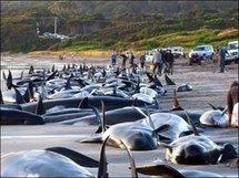 Les maux de la terre gagnent les océans: danger pour l'homme