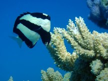 Plus de 12% des espèces de la zone tropicale du Pacifique sont menacées