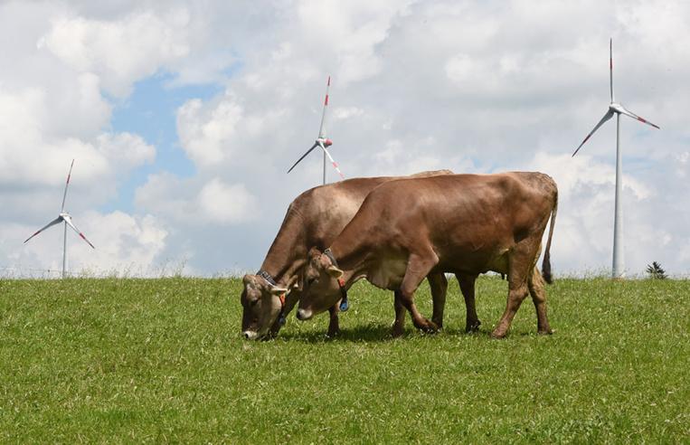 Des éleveurs dénoncent des troubles d'origine électrique et saisissent la justice