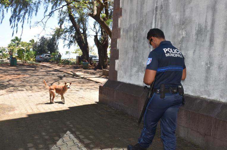 La police municipale repère les chiens errants ou divagants.